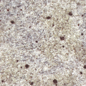 Kashmir White granite colour