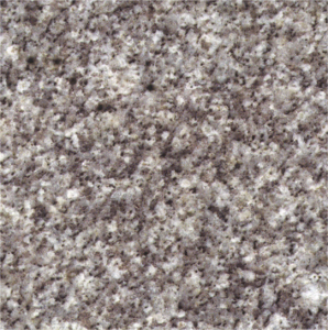 shell white colour granite